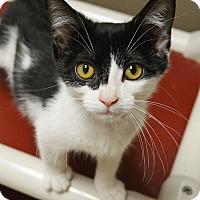 Adopt A Pet :: Liam - Springfield, IL