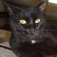 Adopt A Pet :: Brighton - Germansville, PA