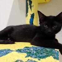 Adopt A Pet :: Hansel - Belleville, MI