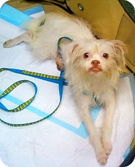 Terrier (Unknown Type, Small) Mix Dog for adoption in Concord, North Carolina - FeFe