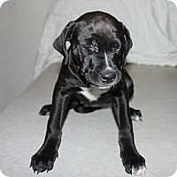 Adopt A Pet :: Hope - Philadelphia, PA