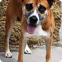 Adopt A Pet :: CK - Gilbert, AZ