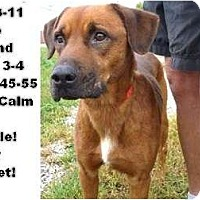 Adopt A Pet :: # 498-11 @ Animal Shelter - Zanesville, OH