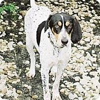 Adopt A Pet :: Chloe - Schererville, IN