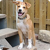 Adopt A Pet :: Luna - Hamilton, ON