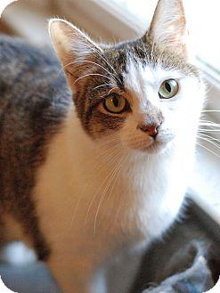 Domestic Shorthair Cat for adoption in Huntsville, Alabama - Janet