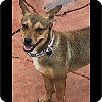 Adopt A Pet :: Pinky - hollywood, FL