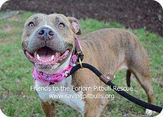 Pit Bull Terrier Dog for adoption in Dallas, Georgia - Daisy