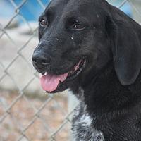 Adopt A Pet :: Kali - Cranston, RI