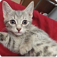 Adopt A Pet :: Alyssa - Huntley, IL