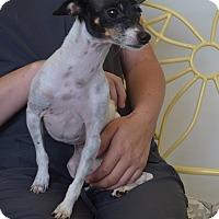 Adopt A Pet :: MOLLY - New Iberia, LA