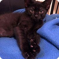 Adopt A Pet :: Landon - Toms River, NJ