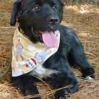 Adopt A Pet :: Junior - Helena, AL