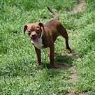 Adopt A Pet :: Caitlin