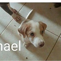 Australian Cattle Dog Dog for adoption in Phoenix, Arizona - Michael