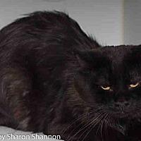 Adopt A Pet :: SALEM - Albuquerque, NM