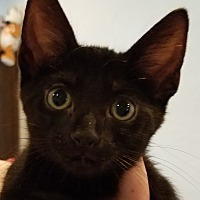 Adopt A Pet :: Simon - Forest Hills, NY