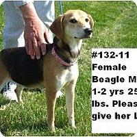 Adopt A Pet :: # 132-11 @ Animal Shelter - Zanesville, OH