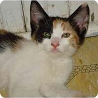 Adopt A Pet :: Summer - Davis, CA