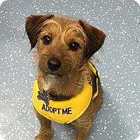 Adopt A Pet :: Chase - New York, NY