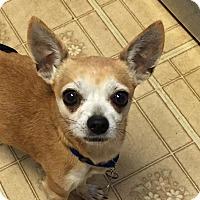 Adopt A Pet :: Hank - Carey, OH