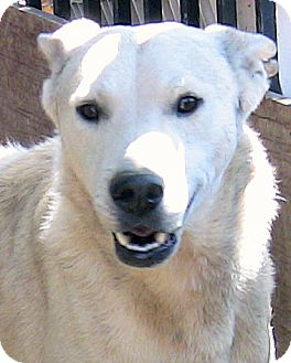 Shepherd (Unknown Type)/Canaan Dog Mix Dog for adoption in Poway, California - Caleb