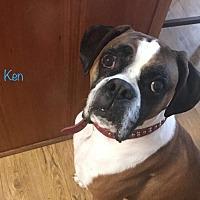 Adopt A Pet :: Ken - Brentwood, TN