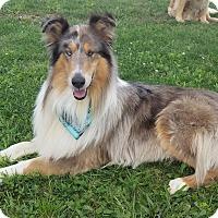 Adopt A Pet :: Tony - Powell, OH