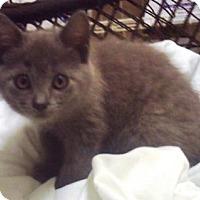 Adopt A Pet :: Fog - Americus, GA