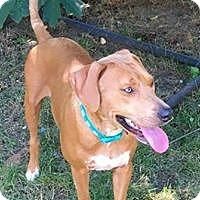 Adopt A Pet :: Grace - Smithtown, NY