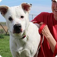 Adopt A Pet :: Snowball-Prison Graduate - Elyria, OH