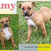 Adopt A Pet :: Amy - Cuba, MO