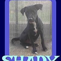 Adopt A Pet :: SHADY - Sebec, ME