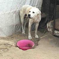 Adopt A Pet :: ROSCO - Hanford, CA
