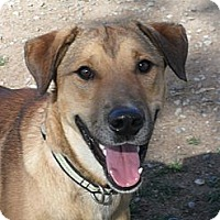 Adopt A Pet :: Clyde #5238 - Jerome, ID