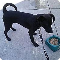 Adopt A Pet :: Toulouse - Minneapolis, MN