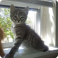 Adopt A Pet :: Baby Grant - Easley, SC