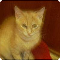 Adopt A Pet :: Duey - Mobile, AL