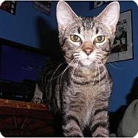 Adopt A Pet :: Mazie - Warren, MI
