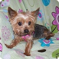 Adopt A Pet :: Daisey - Fremont, CA