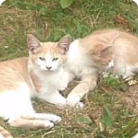 Adopt A Pet :: Peaches - Syracuse, NY