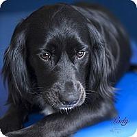 Adopt A Pet :: Lady Francine - Rancho Mirage, CA