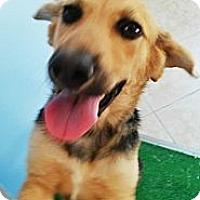 Adopt A Pet :: Nadine - Leesburg, VA