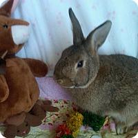 Adopt A Pet :: Rio - Williston, FL