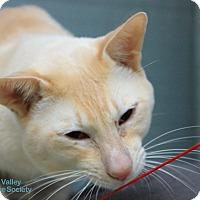 Adopt A Pet :: Pinkerton - Mission, BC