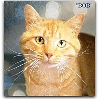 Adopt A Pet :: Bob - Chattanooga, TN