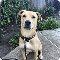 Adopt A Pet :: Jerzee - Mission Viejo, CA