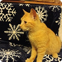 Adopt A Pet :: Chex Shoulder Rider - McDonough, GA