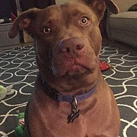 Adopt A Pet :: LOGAN (COURTESY POST) - Phoenix, AZ