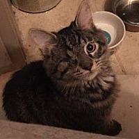 Adopt A Pet :: Sparky - Enid, OK